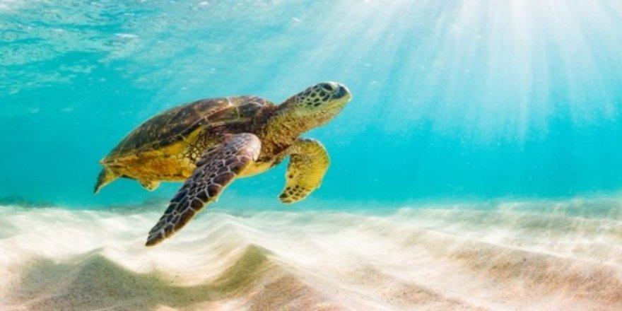 Kaplumbağa etinden zehirlenen sekiz çocuk öldü