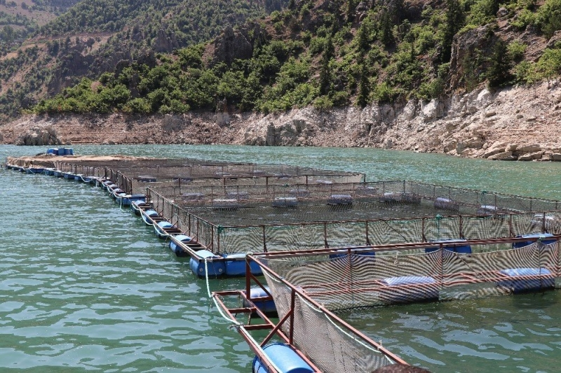Denizi olan illeri solladı: 4,7 bin ton balık üretiyor