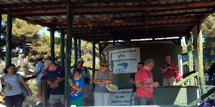 Kaplumbağa rehabilitasyon merkezine ilgi yoğun