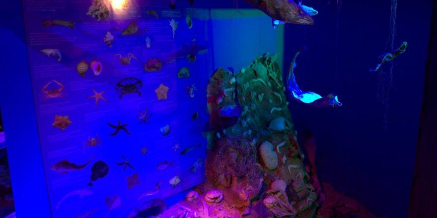 Sualtının büyülü dünyası Antalya Deniz Müzesi'nde