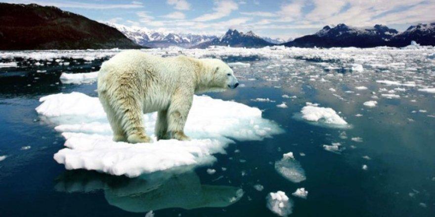 Arktik Denizi'nde buzlar hızla eriyor
