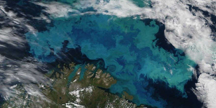 Okyanus alglerinin azalması küresel ısınma nedeni mi