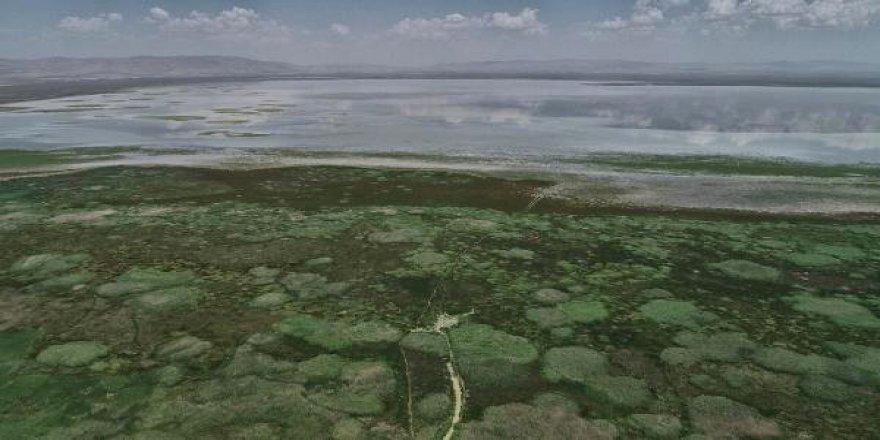 Akşehir Gölü'ne Sakarya Nehri'nden takviye