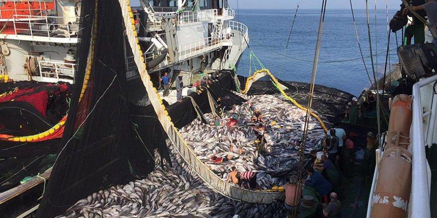 balıkçılık ile ilgili görsel sonucu