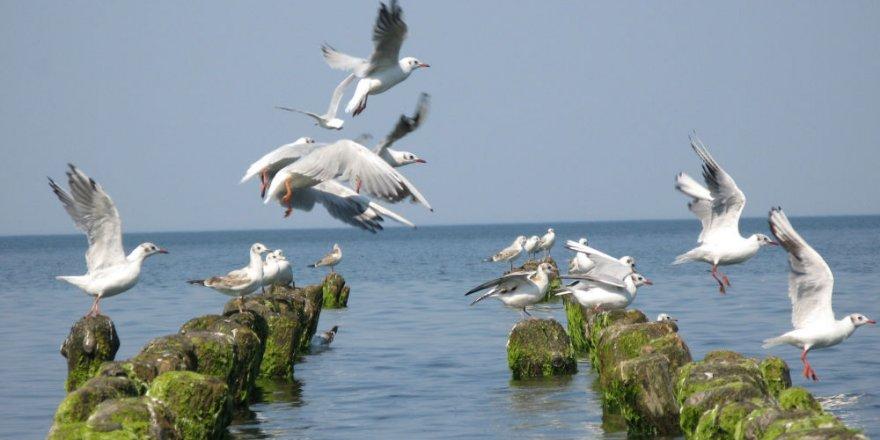 Baltık Denizi'ndeki felaketin başlıca sebebi açıklandı
