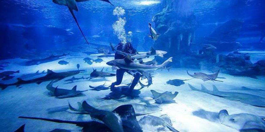 Yeni bir köpek balığı türü keşfedildi
