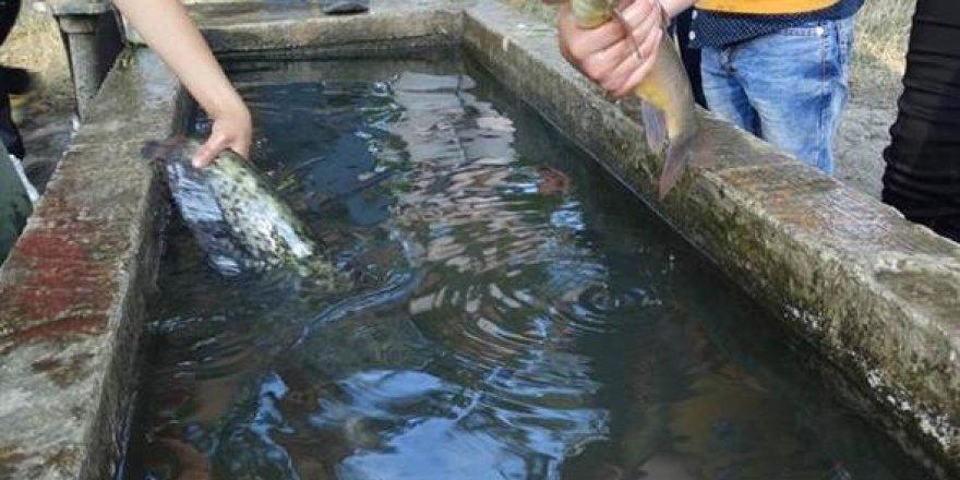 Balıkları yıkayarak korumaya çalıştılar!