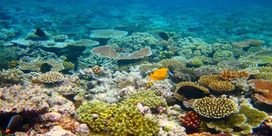 Okyanus asitlenmesi denizde yaşamı yok ediyor