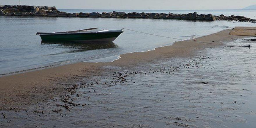 Felakette denize akan fındıklar sahile vuruyor