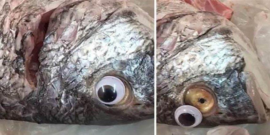Taze gözüksün diye balıklara oyuncak göz taktı!