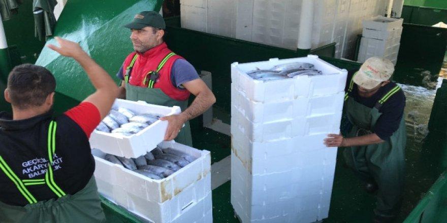 Balıkçılar 4 bin kasa palamut yakaladılar