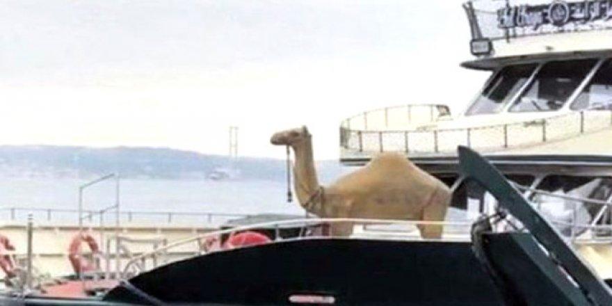 Boğaz'da develi turizm