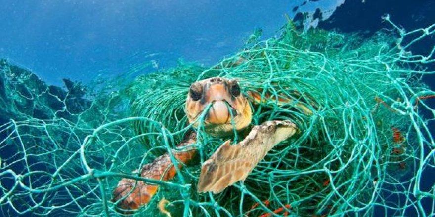 Akdeniz ekosistemi korumaya alınıyor