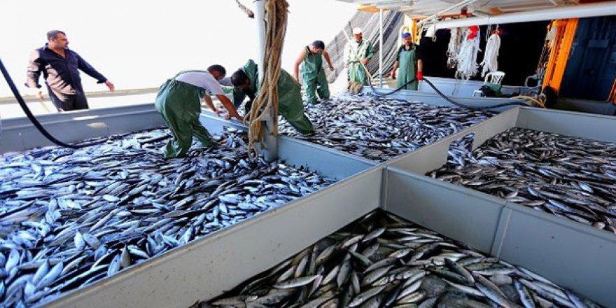 Karadeniz'de balık çeşidi 15-20'lere düştü