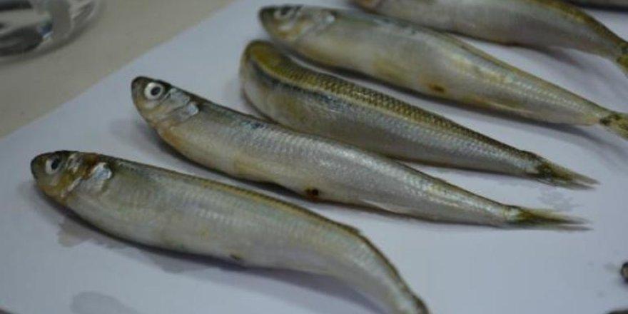 2 balık türünde hastalık yapan parazit tespit edildi