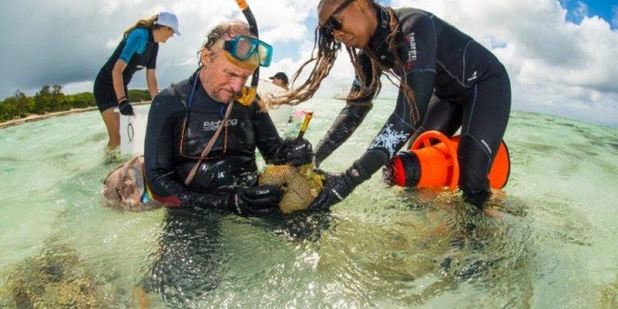 Büyük Set Resifi'ne 100 bin yeni mercan taşındı