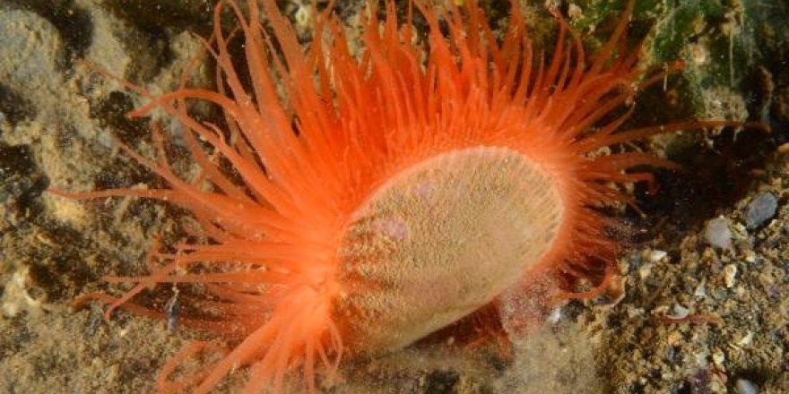 Körfez'de 57 farklı balık ve canlı türü yaşıyor