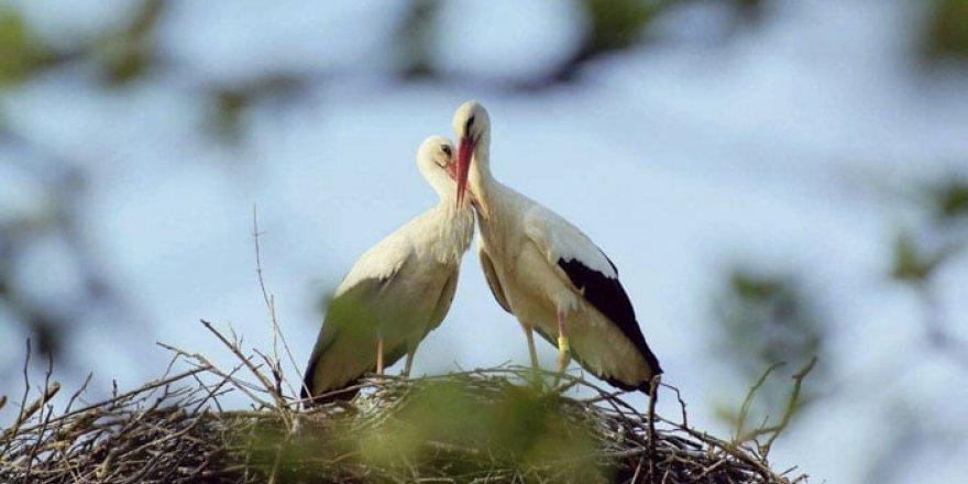 Onlarınki ibretlik bir aşk hikayesi!
