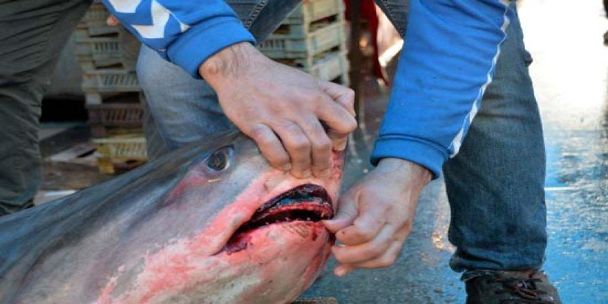 Balıkçının başını yakan görüntü