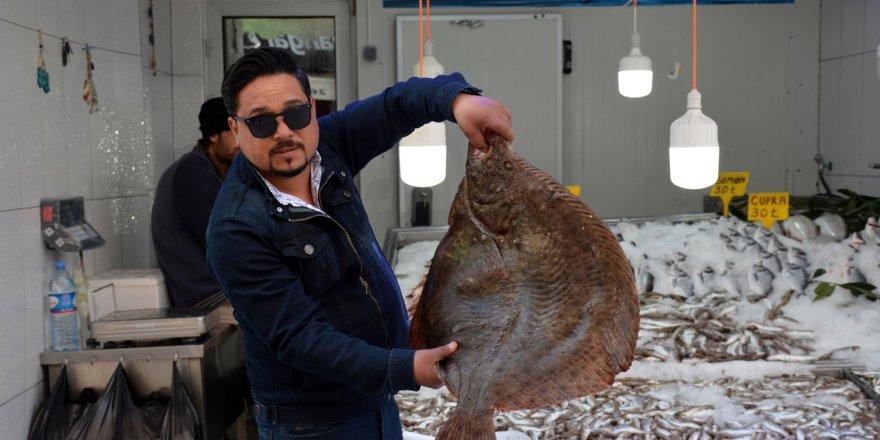 Bu balık asgari ücret fiyatına alıcı bekliyor