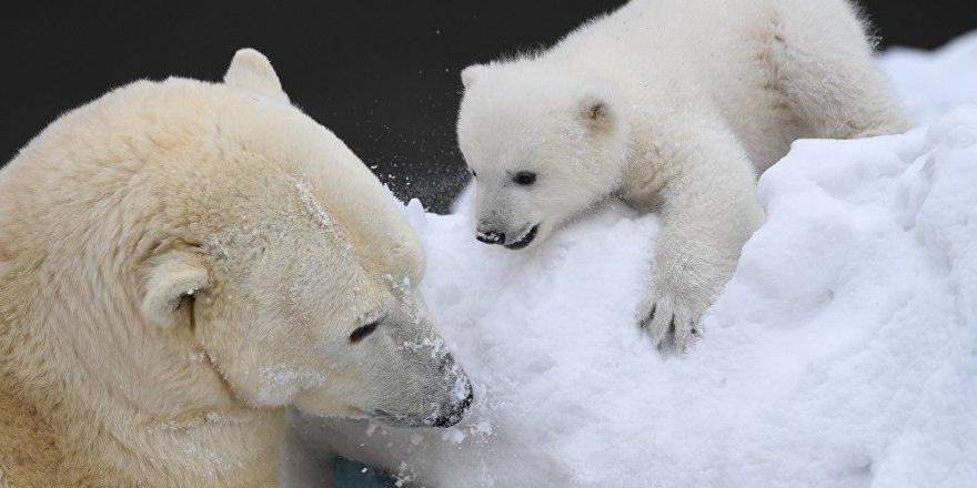 Putin: Arktika'da çevre büyük tehdit altında