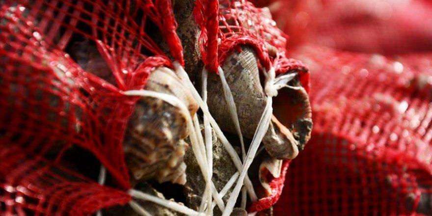 """Balıkçılar yüzünü """"salyangoz""""a döndü"""