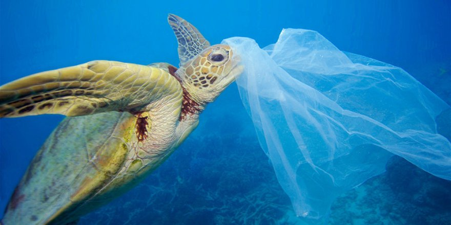 Plastikten en çok etkilenen beş deniz canlısı