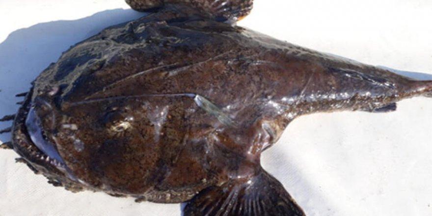 Karadeniz'de ağlara 'Fener balığı' takıldı