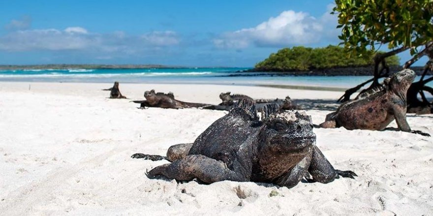 Ekvador, Galapagos'u ABD askerlerine açtı