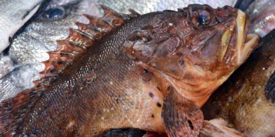 Av yasağı ile birlikte gözde balık oldu