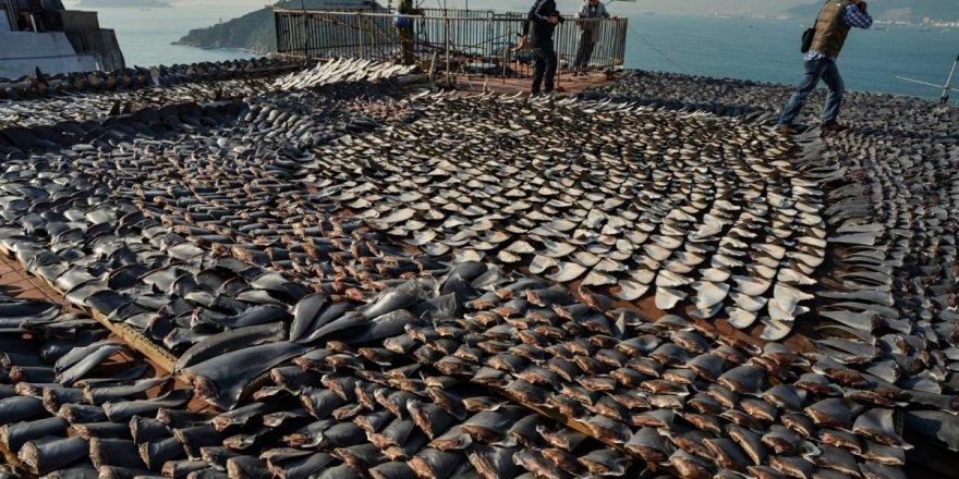 Kanada, köpekbalığı yüzgecinden vazgeçti