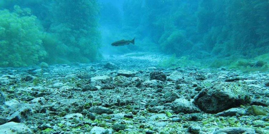 Denizlerimiz istilacı türlerden korunacak