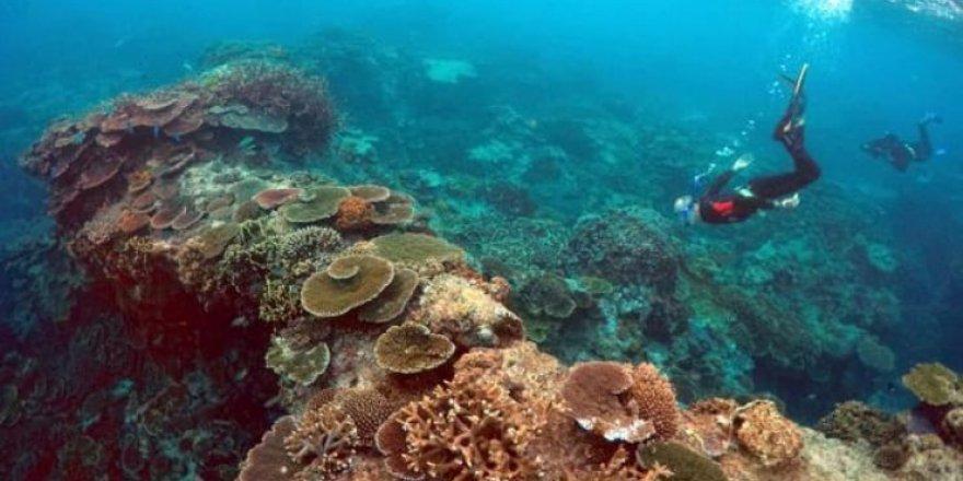 Greenpeace'den derin deniz madenciliği uyarısı