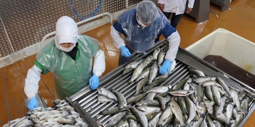 Tütsülenmiş alabalıkla Çin ve Japonya pazarına girdiler