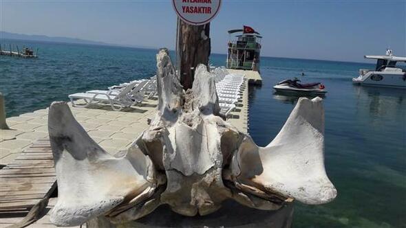 Deniz kıyısında devasa kemikler bulundu