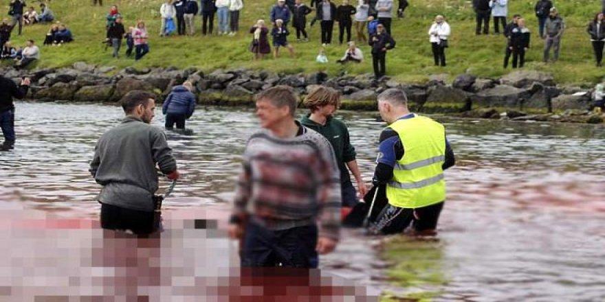 Yüzlerce balina hunharca katledildi