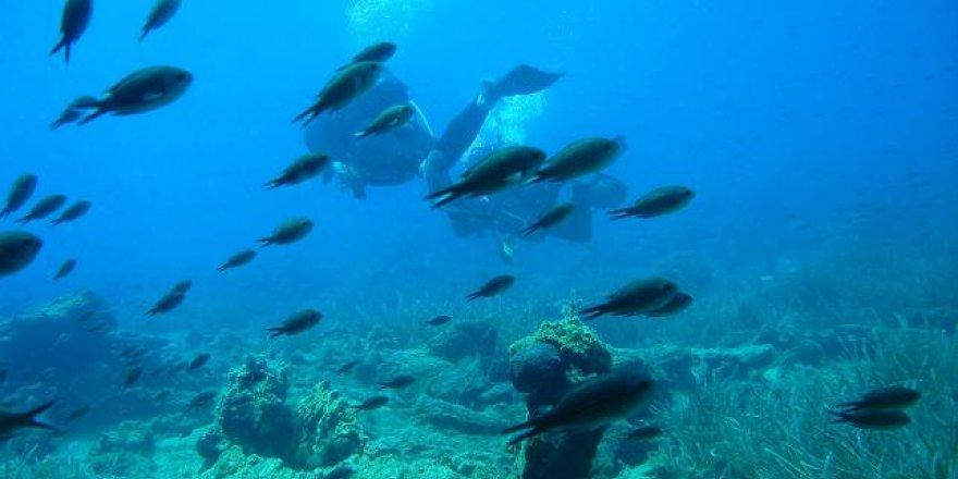 Türkiye denizleri dünyada tanıtılacak