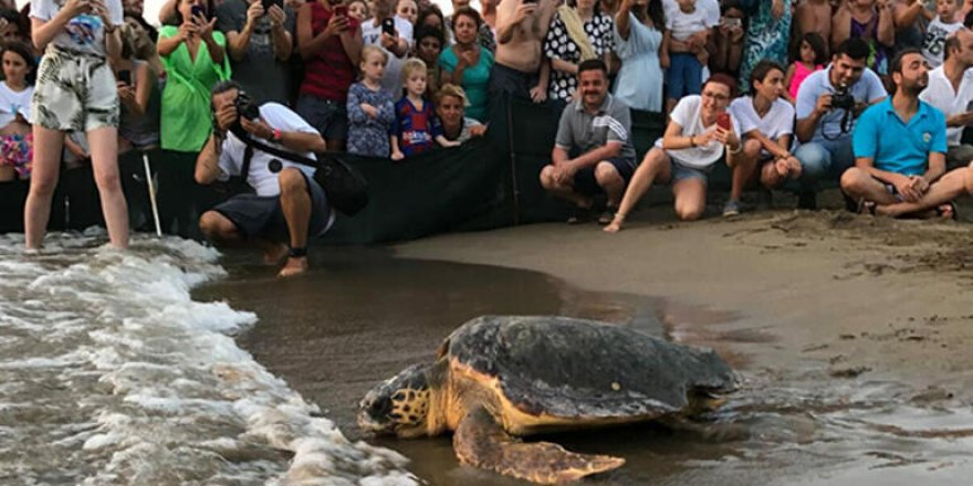 Sağlığına kavuşan 6 caretta denize bırakıldı