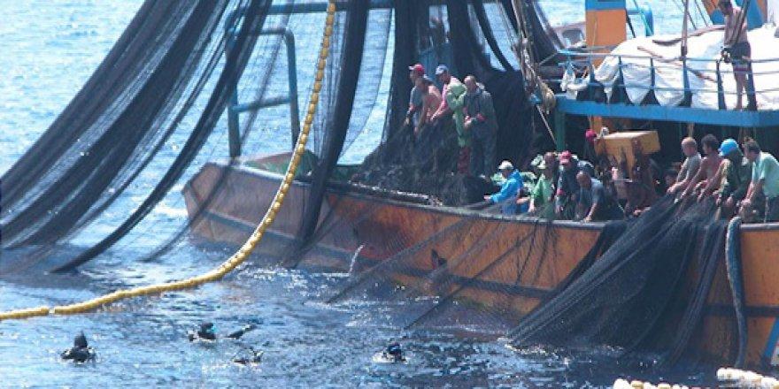 'Balık stokları tükeniyor' uyarısı
