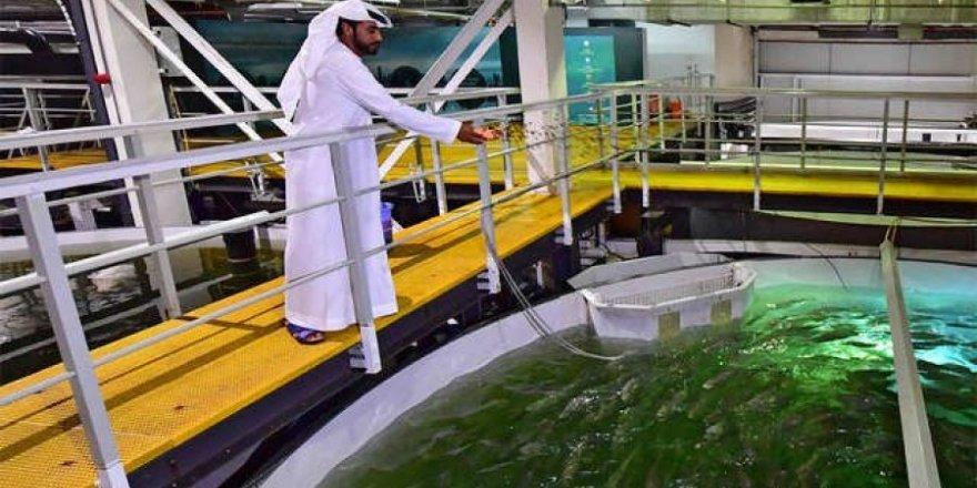 Dubai'de çölün ortasına somon çiftliği kurdu