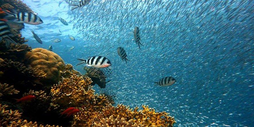 Okyanuslar 'nefessiz' kaldı