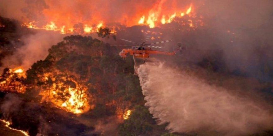 Avustralya' da yangın neden sönmüyor? Tüm detaylar...