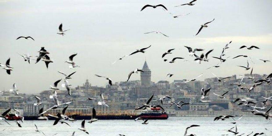 İstanbul'da ölen kuşlara Batı Nil virüsü bulaşmış