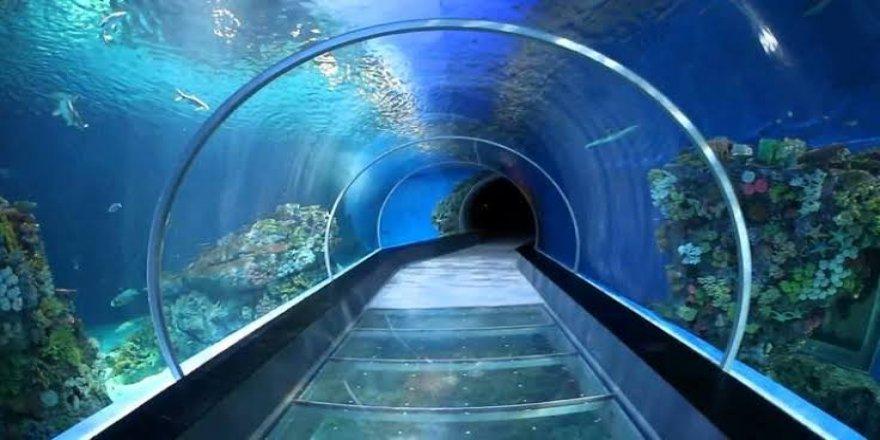 Trabzon'a tünel akvaryum yapılacak