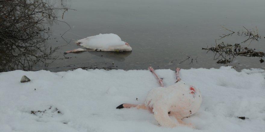 12 flamingo donarak öldü