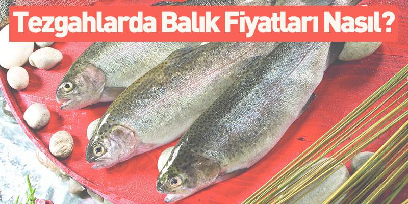 Tezgahlarda Balık Fiyatları Nasıl