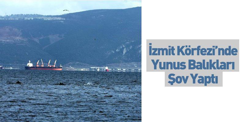 İzmit Körfezi'nde Yunus Balıkları Şov Yaptı