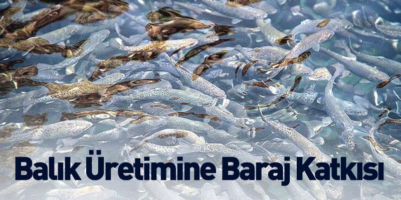 Balık Üretimine Baraj Katkısı
