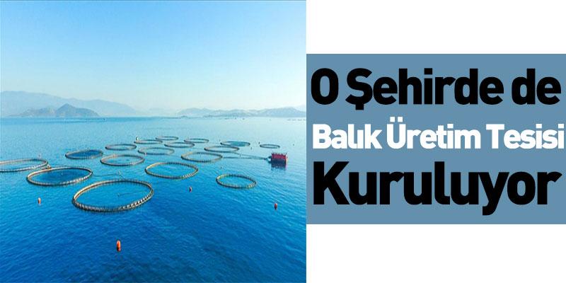 O Şehirde de Balık Üretim Tesisi Kuruluyor