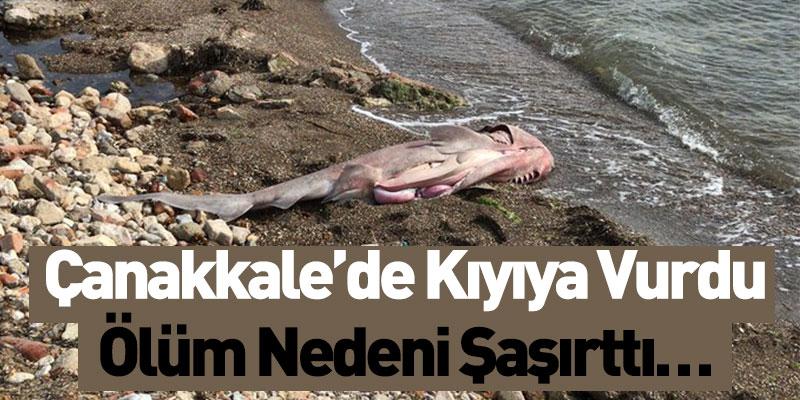 Çanakkale'de Kıyıya Vurdu Ölüm Nedeni İse…